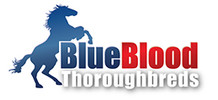 Blueblood Thoroughbreds