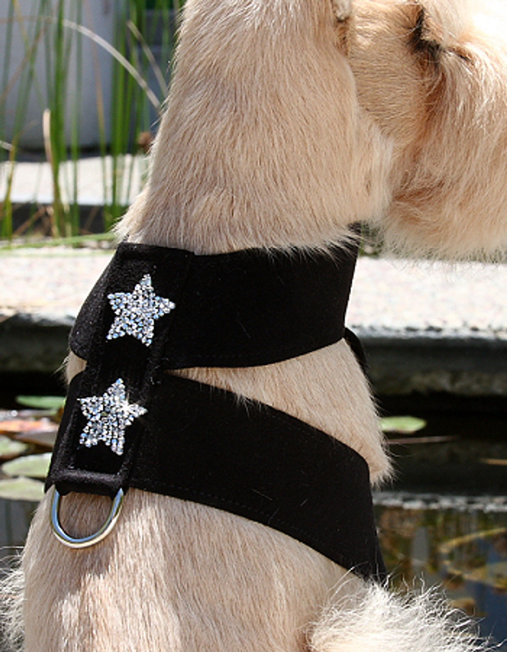 Glamour RockStar 450__29513.1462453366?c=2?imbypass=on rock star dog tinki harness by susan lanci 30 colors