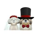 Formal  & Wedding