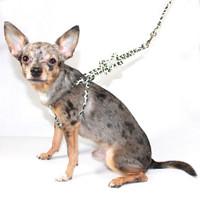 Camo Star Charm Step In Dog Harness
