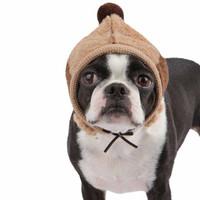 Dodo Dog Hat by Puppia