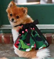 Dog Dress - The Shasha