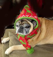 Winter Moose Red Dog Hat
