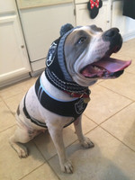NFL Oakland Raiders Dog Mesh Harness - Big Dog Sizes Too!