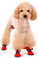 Solid Red Slip On Paws Dog Boots