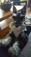 Lexi sporting her Houndstooth Harness