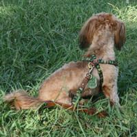 Shades of Green Leather Dog Harness - Medium