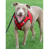 Worthy Dog Step-in Sidekick Dog Harness - Green