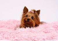 Shown in Puppy Pink