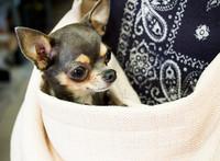 Vienna Pet Dog Sling - Truffle