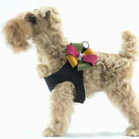 Autumn Bow Dog Step In Harness