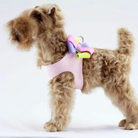 Madison Bow Dog Step In Harness