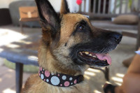 Dots Pink African Beaded Collar & Leash Collection