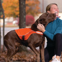 Reflect and Protect Active Dog Vest