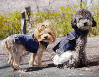 Geolgine Denim LOVE Dog Jacket - Navy Blue
