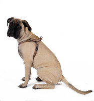 Step-in Swiftlock Dog Harness - Leopard