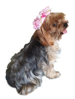 Pink Victorian Lace Pirate Costume Pet Dog Hat