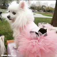 Puppy Angel Tutu Dog Dress - Beige