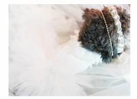 Perfect dog dress for weddings