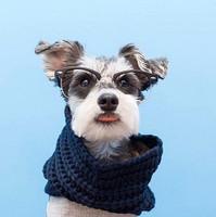 Infinity Dog Scarf - Oatmeal Beige