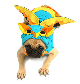Pet Dog Costume - Owl