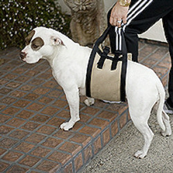 Companion Mobility Pet Dog Harness