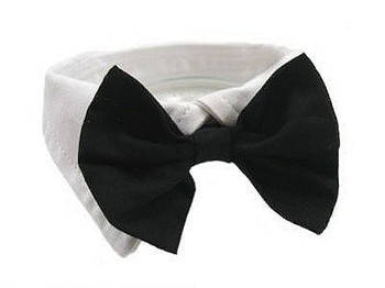 Dog Collar and Black Bow Tie Set