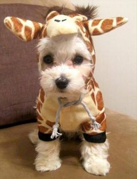 Dog Costume - Giraffe