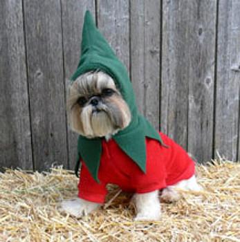 Dog Costume - Chili Pepper