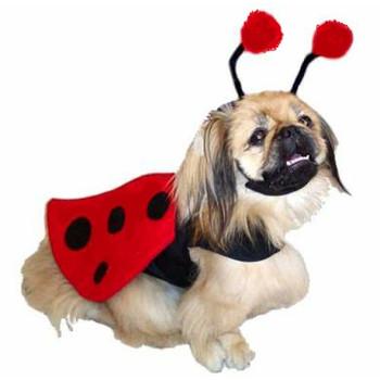 Dog Costume - Lady Bug