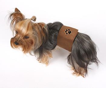 Dog wearing Susan Lanci Wizzer Belly Band