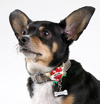 Tattoo Dog Collar - Antique Brass