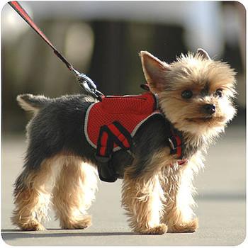 Sport Sac with Leash Dog Backpack