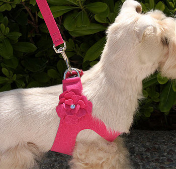 Garden Step In Dog Harness by Susan Lanci