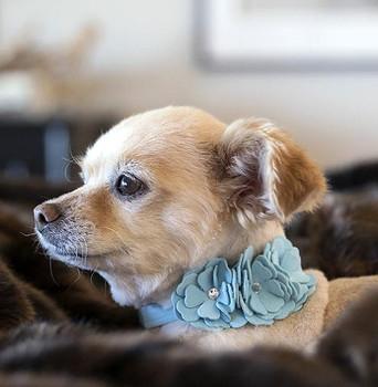 Puppy Blue Tinkies Garden Collar