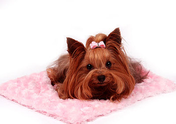Carrier Plush Dog Blankets - Susan Lanci (14 Colors)