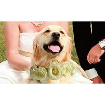 Rose Ring Dog Wedding Collars
