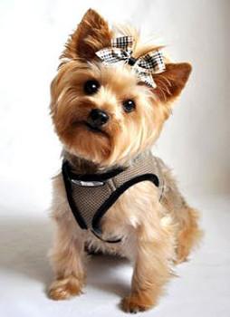 Ultra Choke Free Step In Dog Harness - Taupe