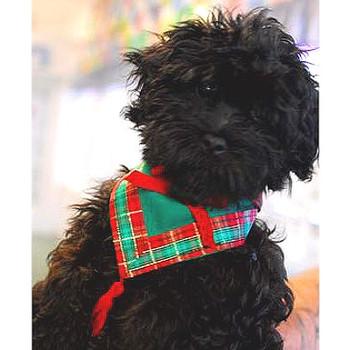 Plaid Me Up Christmas Dog Bandana