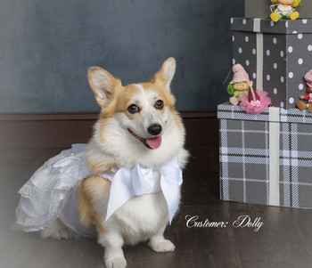 Dog Wedding Dress Set w/ Veil and Leash