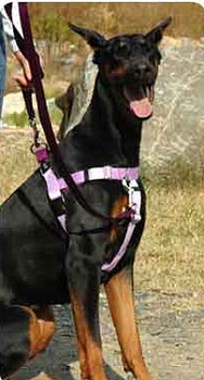 Patented Freedom No-Pull Dog Harness