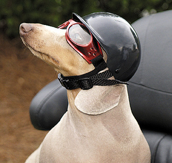 Dog Motorcycle Biker Helmet - Wet Nose Black