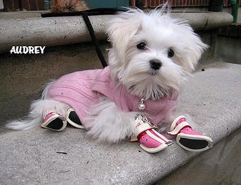 Pinky Doggie Stylin Boots