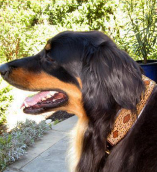Cheetah African Beaded Collar & Leash Collection