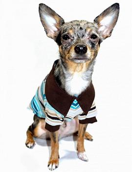 Crown HD Polo Dog Shirt by Hip Doggie