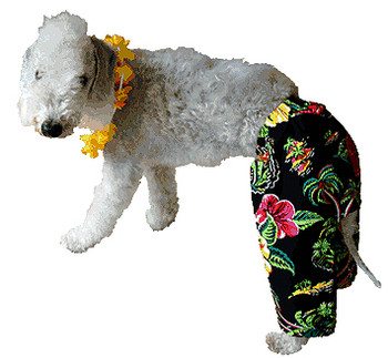 Neon Village Dog Board Shorts
