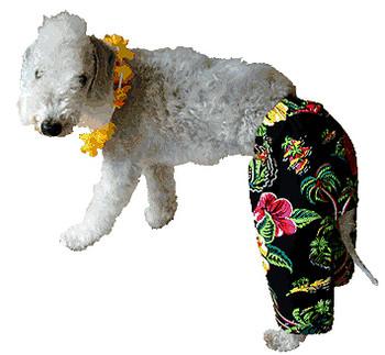 Neon Village Dog Board Shorts