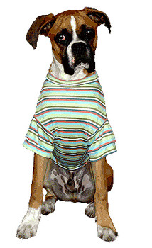 The Best Stripe Ever Boy Dog Tee