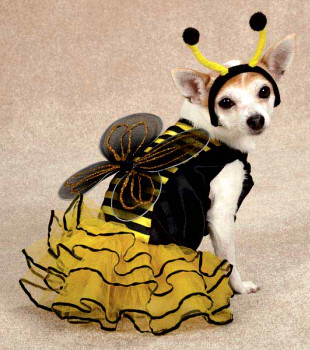 Bee Mine Dog Costumes - Large Dog Sizes Too!