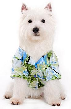 Hawaii Fever Dog Camp Shirt